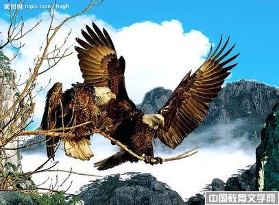 鹰之歌_鹰-蛇-高尔基